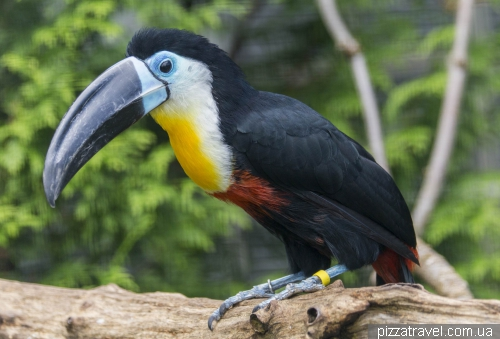 The largest bird park in the world in Walsrode