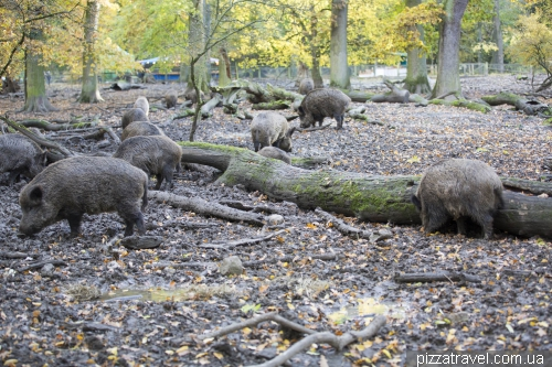 Зоопарк в Шпрінге