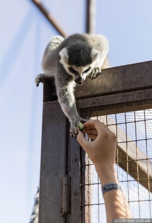 Monkey Park, Tenerife