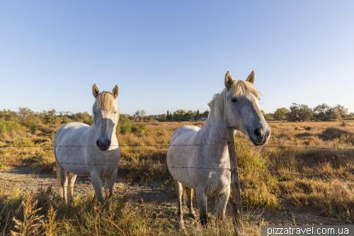 Национальный парк Камарг