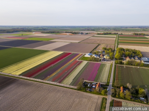 Tulip Festival in the Netherlands