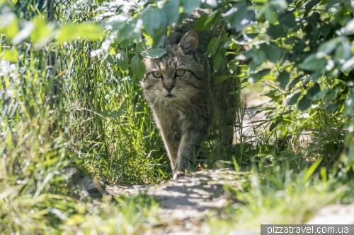 Приют диких котов в Хютшенроде (Wildkatzendorf Huetscheroda)