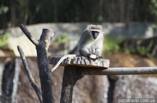 Сафари-парк Серенгети