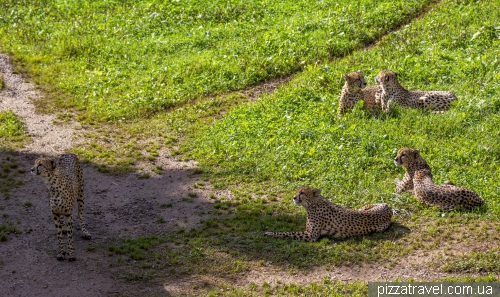Cabarceno Safari (Parque de la Naturaleza de Cabarceno)