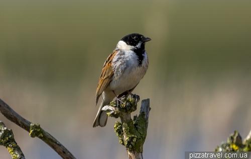 Домик для наблюдения за птицами Kiekkaaste