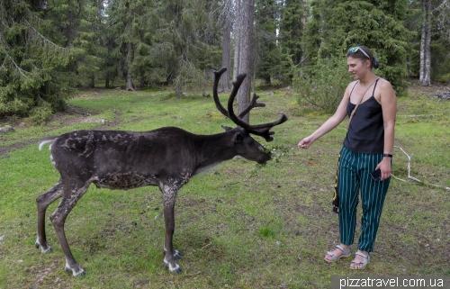 Оленячий парк Салла (Salla Reindeer Park)