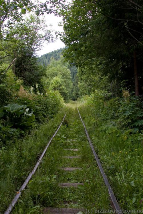 Карпатский трамвай - дорога в лесу