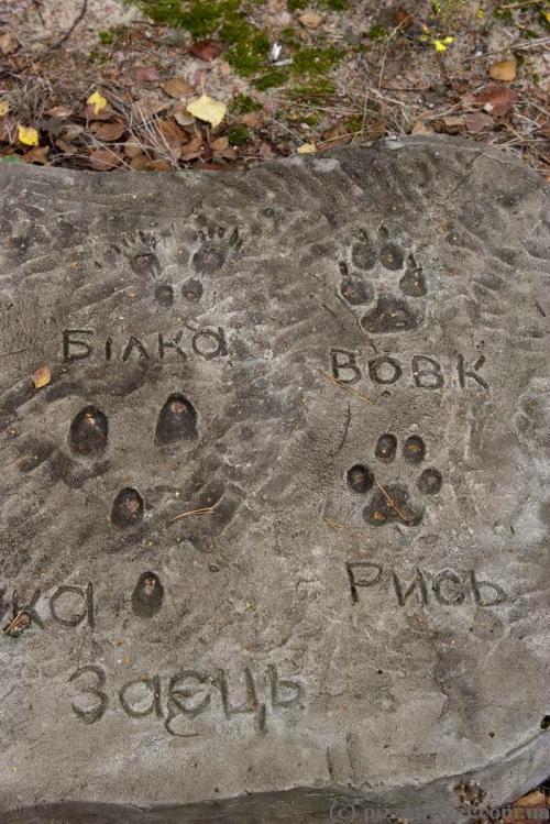 Платформа со следами животных