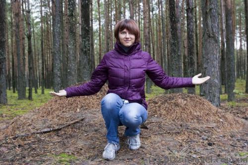 У лісі багато великих мурашників
