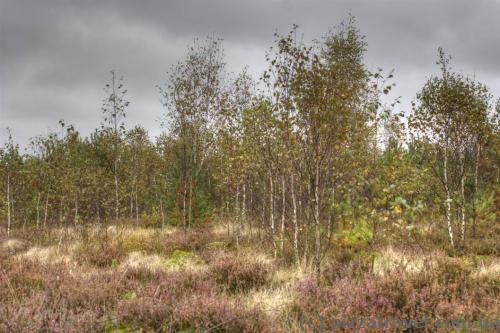 Коварное болото