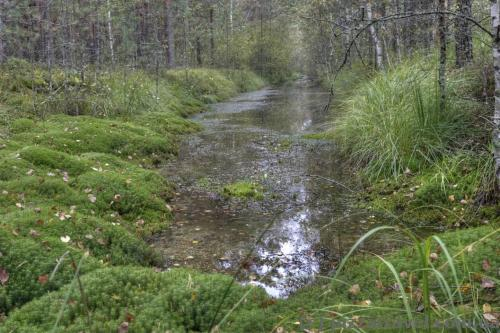 Artificial canals in the forest were formed after the gravel road construction.