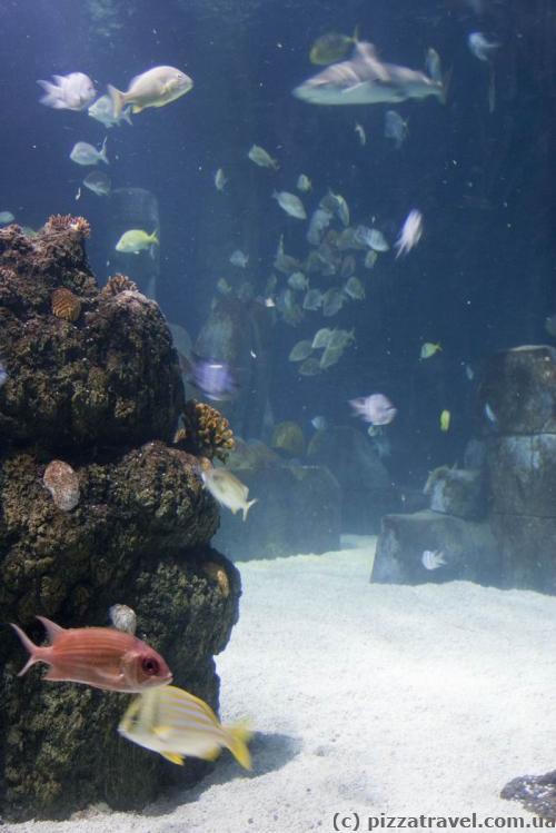 Центр морской жизни в Ганновере