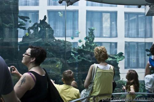 Аквадом у центрі морського життя в Берліні