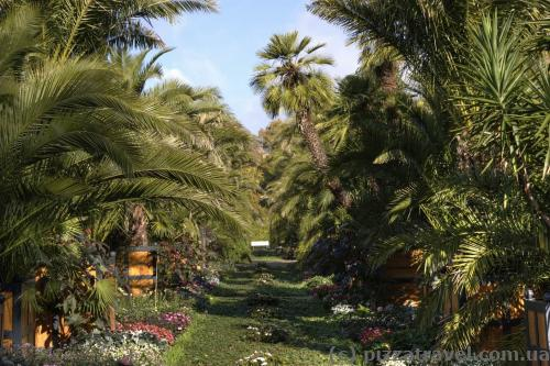 Пальмовый сад