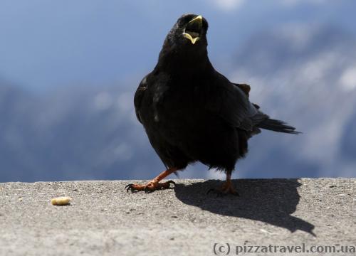 Птичка довольна