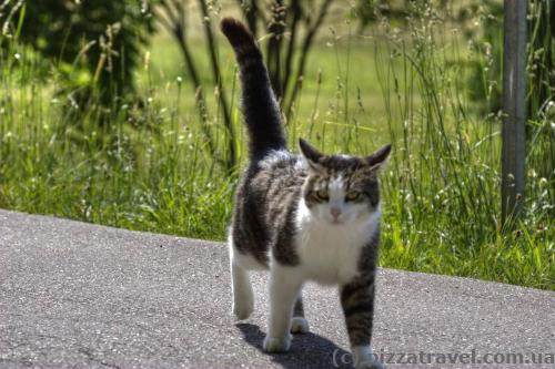 Упитанный немецкий кот в Баден-Бадене