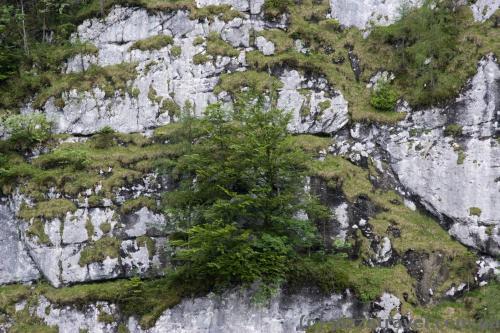 Деревья растут на склонах гор.