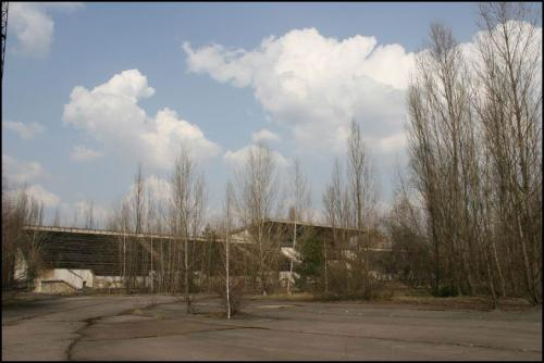 Посреди стадиона растут 15-метровые деревья.