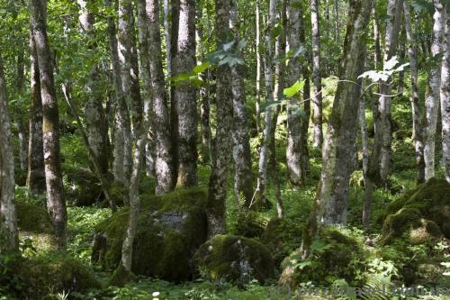 Лес между озерами Кёнигзее и Оберзее