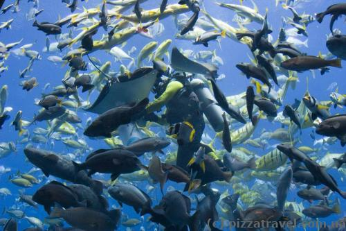 The Lost Chambers aquarium. Feeding the fish