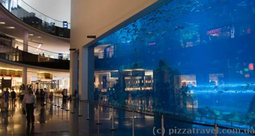 The world's largest aquarium glass in Dubai Mall