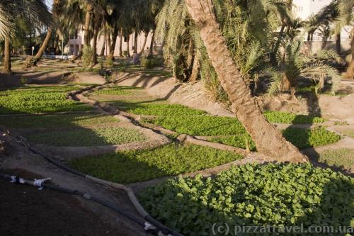 Original lawns in Aqaba