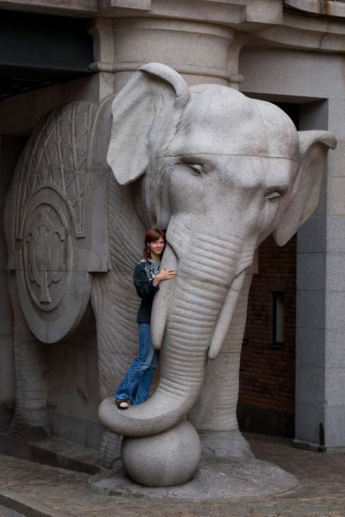 Elephants near the Carlsberg factory