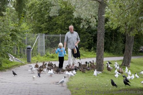 Парк біля замку Фредеріксборг