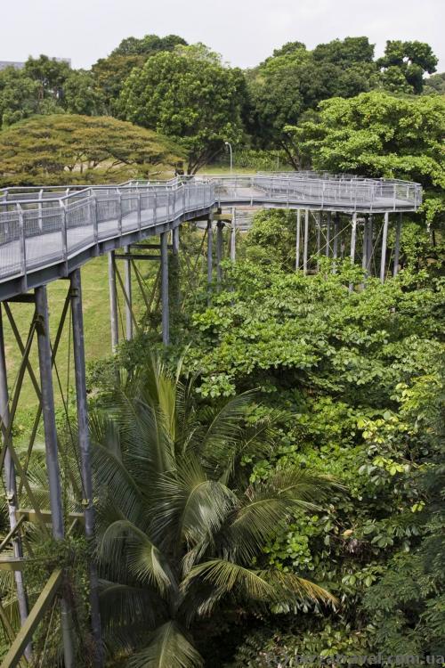 Лесная тропа (Forest Walk)
