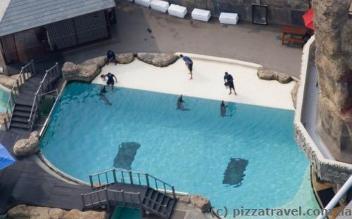 Дельфіни тренуються перед виступом.