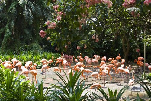 Парк птахів у Сінгапурі