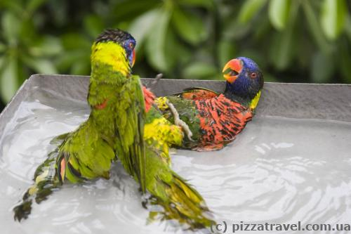 Parrots are fighting for food :)