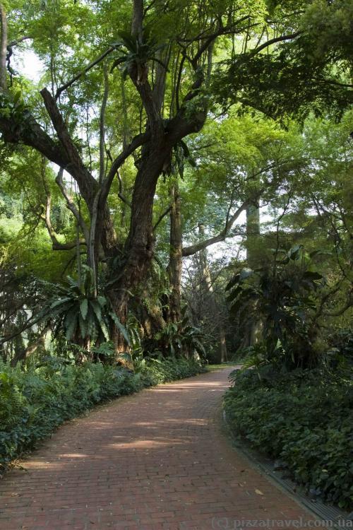 Настоящий ботанический сад
