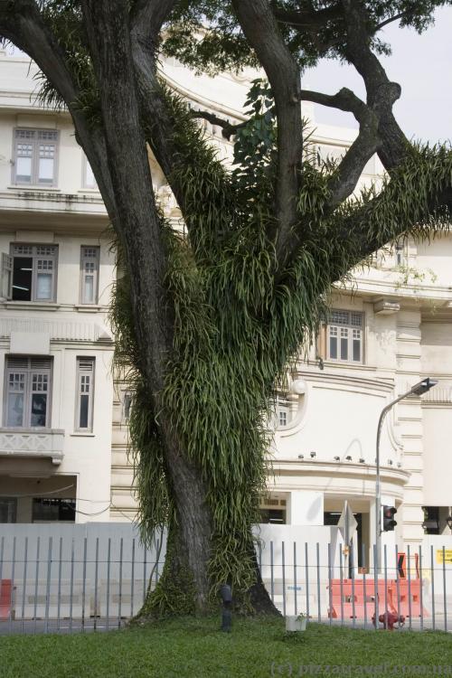 Дерево біля станції метро Сіті Холл
