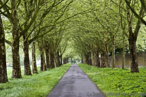 Красива платанова алея біля замку Корвей