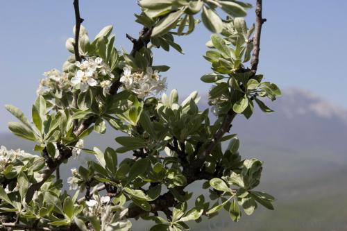 Spring in Demerji
