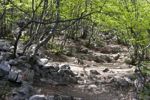 Path to the top of Ai-Petri