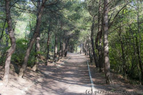 Sunny Trail