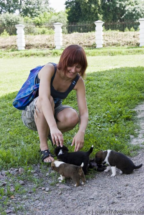 Около дворца нашли много маленьких щенков